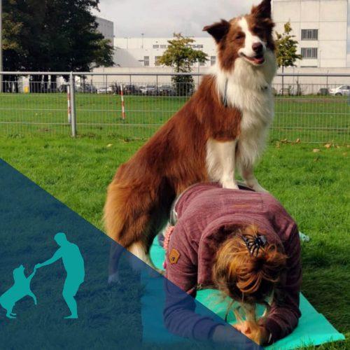 Samen Sporten Met Je Hond – Trainingen