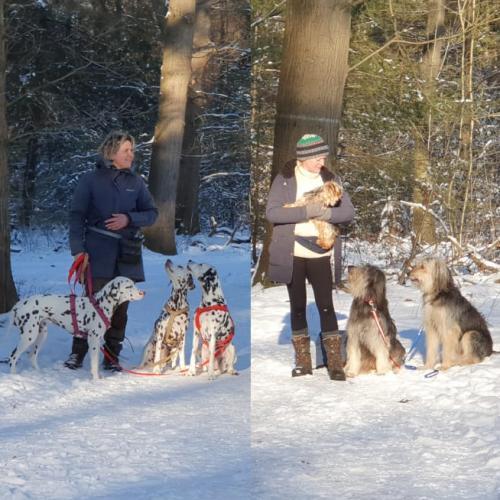 Dokter Snuffel – Je Hond Juist Wel Of Niet Trainen Voor DAI?